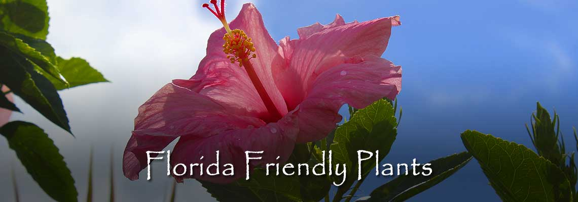 Florida Friendly Planting