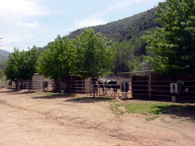 ranch long pens copy