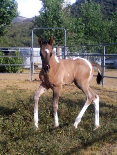 Manana 6 days old