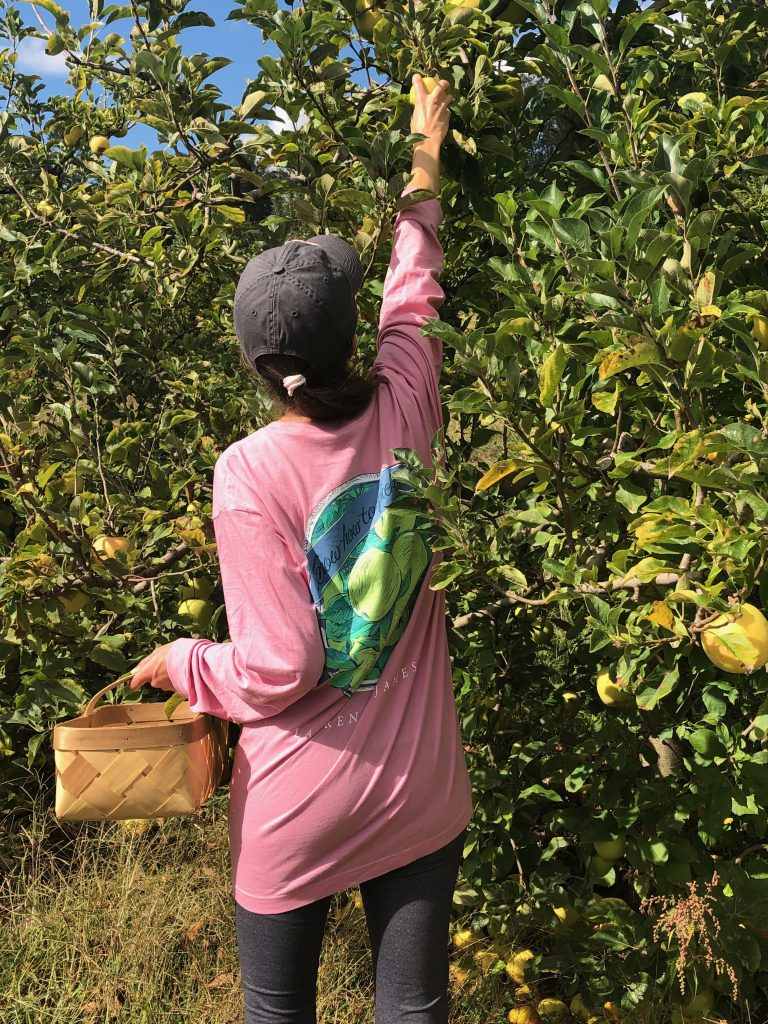 Apple Picking in the North Carolina Mountains