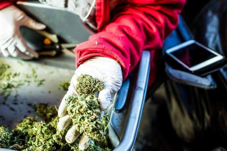Jeff Sessions Reversing Obama-Era Policy on Legal Marijuana