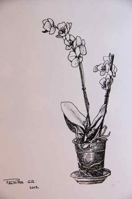 Plant drawings. Dibujos de plantas.