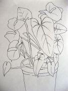 Anthorium, dibujos de plantas a rotring