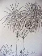 Drago, dibujo drago, plantas canarias
