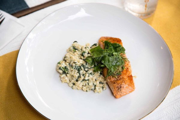 salmon and barley | palms to pines