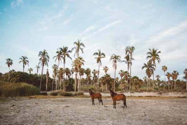 Todos Santos | Palms to Pines | Taryn Kent