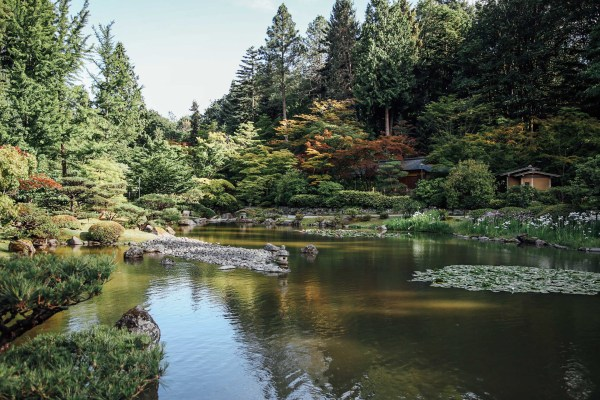 Seattle Japanese Garden | Washington Park Arboretum | Palms to PInes