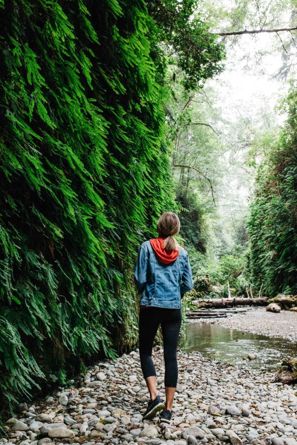 Fern Canyon | Palms to Pines