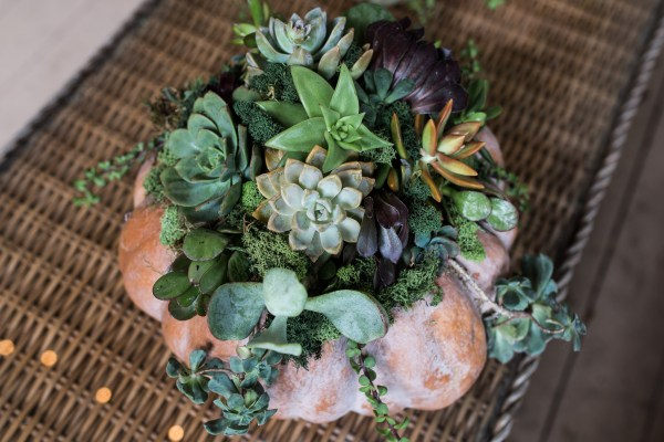 Succulent Pumpkins | Thanksgiving Centerpiece Idea-15