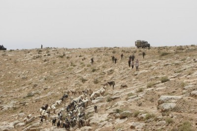 Israeli forces chasing away Palestinian shepherds from the hilltop (Photo by Operation Dove)