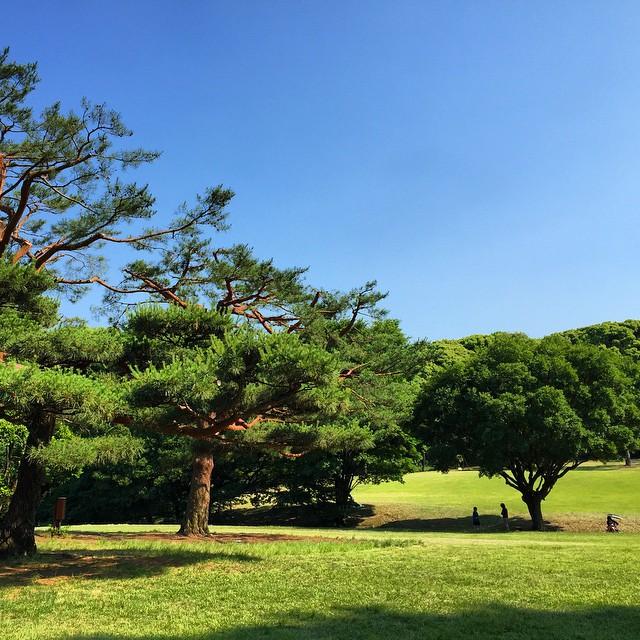 Yoyogi Grass