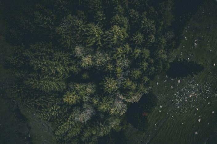 paltenghi_claudio_wald_säntis Landschaftsfotografie