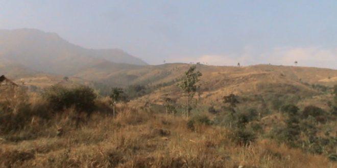 Baru 1000 Hektar Lahan Kritis di Poso Direhabilitasi