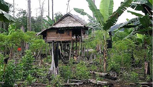 Pemprov Sulteng Tolak Registrasi Permohan Perda Pengakuan Hukum Adat Tau Taa Wana