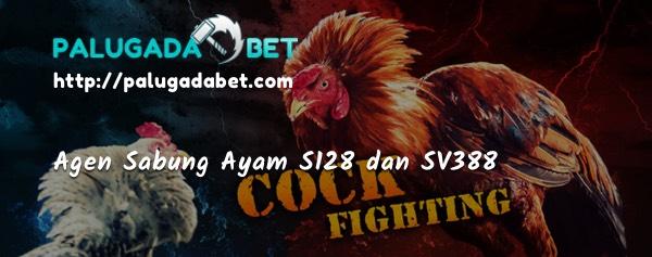 Agen Sabung Ayam SV388 S128