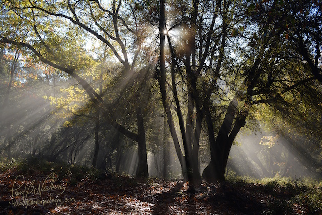 Photo by Jenna Beekhuis - The Brooks Forest