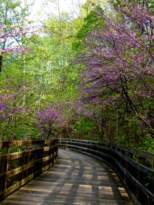 Monticello Walking Path