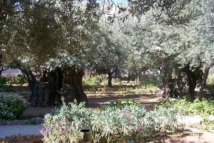 garden_of_gethsemane_pictures_free_9171_1536_1024