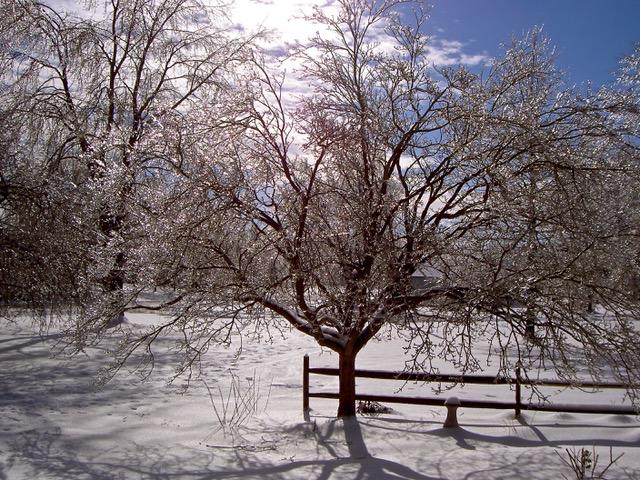 Christmas Morning Backyard 2004 002