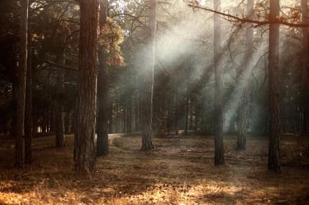 dawn-environment-fall-345522