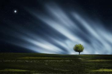 calm-environment-land-36026