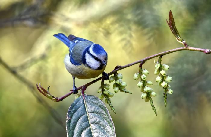 animal-animal-photography-avian-2400030