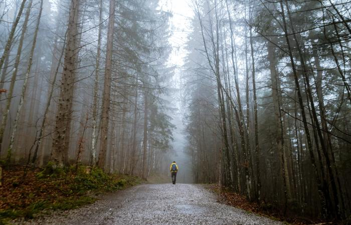 autumn-mood-forest-cold-dawn-397096