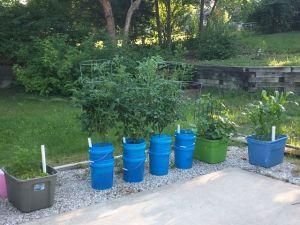 0610-1-garden