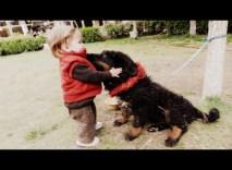 Isabel loved this 2-month old Tibetan mastiff