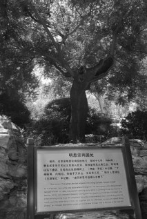 The tree where the last emperor of the Ming Dynasty hung himself: enter the Qing Dynasty!