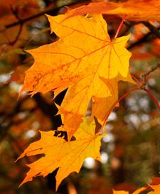 Fall Fixes