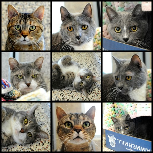 SPCA May cats