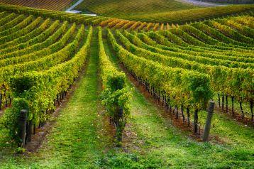 vines 2