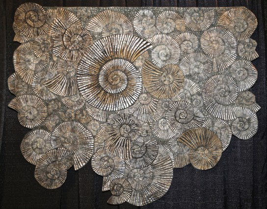 Pyrite Ammonites - by Kimberly Lacy, Colorado Springs, Colorado USA