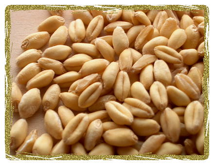 Islamabad withdraws subsidy on wheat, prices to be raised gradually