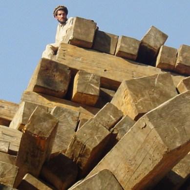 Deforestation, Timber Mafia and Corruption in Diamer