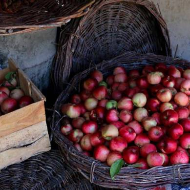 On the wastage of high quality and nutritious apples in Gilgit-Baltistan