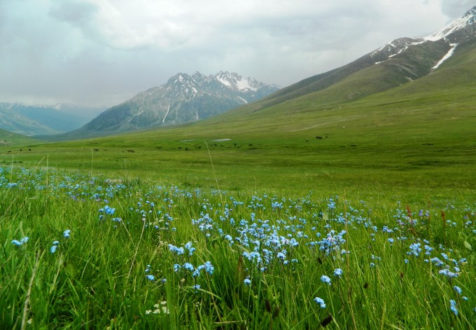 The beautiful plain filled with flowers, also known as Chota Deosai, or Small Deosai