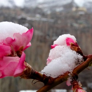 Hunza Exhibits Winter in Spring