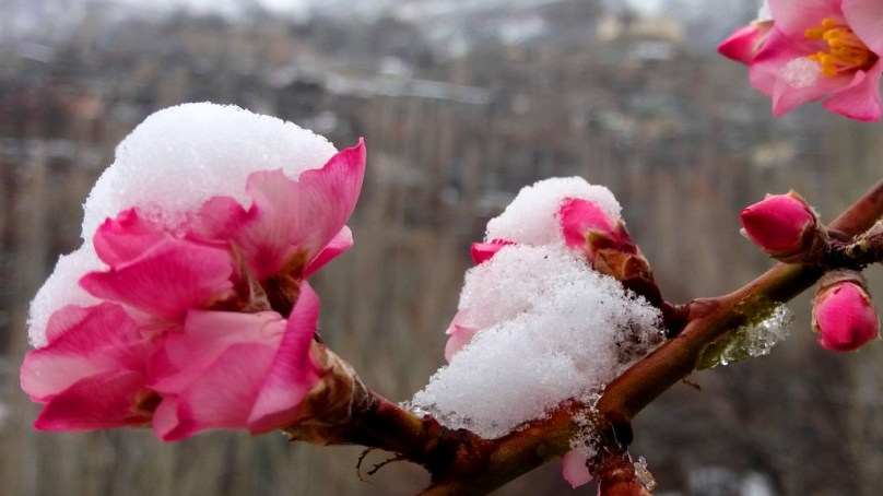 Hunza Exhibits Winter in Spring