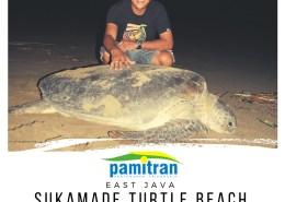 2D1N Sukamade Turtle Beach Tour