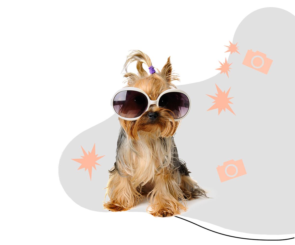 https://i2.wp.com/pamperedpawssd.com/wp-content/uploads/2020/07/grooming-gallery-dog-top-image.jpg?fit=1200%2C997&ssl=1