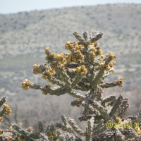 Carlsbad, New Mexico - the Chihuahuan Desert