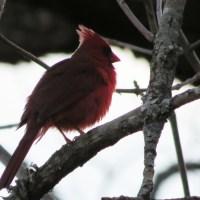 Backyard Birds in Texas