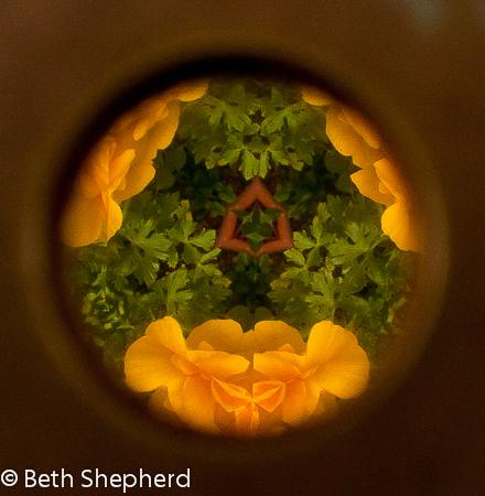 looking through the garden kaleidoscope-yellow