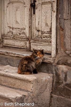Yerevan calico