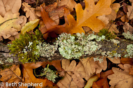 Lichen and moss at Washington Park Arboretum