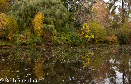 Refllections at Washington Park Arboretum