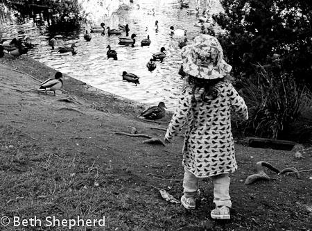 Chasing ducks