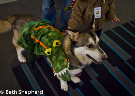Dog in 'gator costume